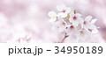 桜 ソメイヨシノ 背景素材 バナー素材 34950189
