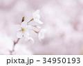 桜 花 春の写真 34950193