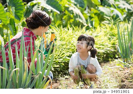 家族 農業 野菜 畑 子供 ファミリー イメージ 34951901