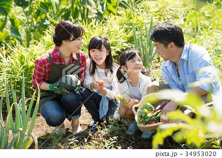 家族 農業 野菜 畑 子供 農業体験 イメージ 34953020
