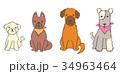 犬 複数5 34963464