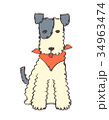 犬1 34963474