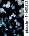 クラゲ 海月 水母の写真 34965812