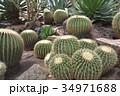 伊豆シャボテン動物公園のサボテン金鯱 34971688