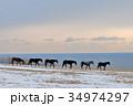 馬 サラブレッド 牧場の写真 34974297