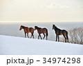 馬 サラブレッド 牧場の写真 34974298