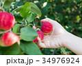 りんご アップル リンゴの写真 34976924