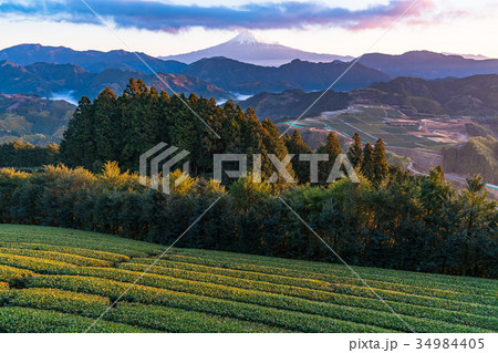 《静岡県》富士山と茶畑《夜明け》 34984405