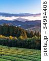 富士山 茶畑 静岡県の写真 34984406