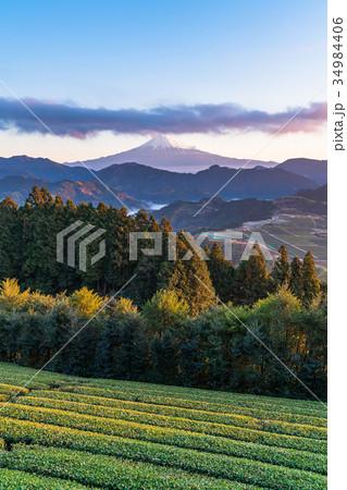《静岡県》富士山と茶畑《夜明け》 34984406