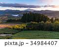富士山 茶畑 静岡県の写真 34984407
