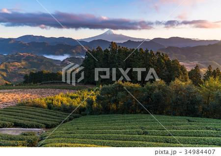 《静岡県》富士山と茶畑《夜明け》 34984407
