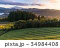 富士山 茶畑 静岡県の写真 34984408