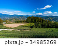 富士山 茶畑 静岡県の写真 34985269