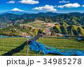 富士山 茶畑 静岡県の写真 34985278