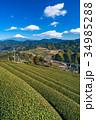 富士山 茶畑 静岡県の写真 34985288