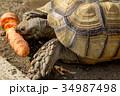 ケヅメ陸ガメのお食事 34987498