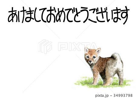 犬の賀詞入り素材茶柴犬ヨコ型 34993798