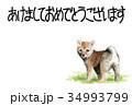 年賀状 戌年 子犬のイラスト 34993799