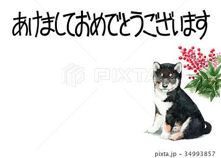 犬の賀詞入り年賀ハガキ素材黒柴犬ヨコ型 34993857