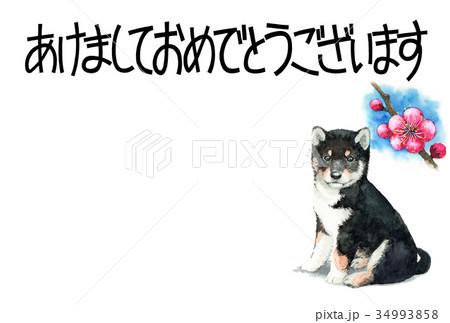 犬の賀詞入り年賀ハガキ素材黒柴犬ヨコ型 34993858