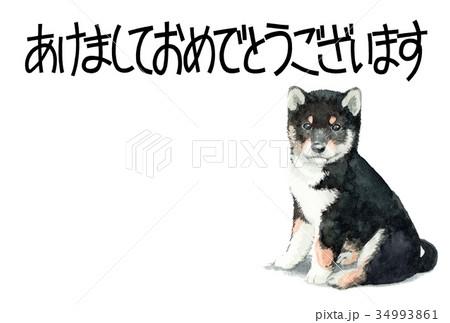 犬の賀詞入り年賀ハガキ素材黒柴犬ヨコ型 34993861