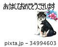 年賀状 犬 戌年のイラスト 34994603