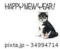 年賀状 犬 戌年のイラスト 34994714