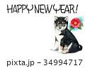 年賀状 犬 戌年のイラスト 34994717