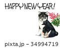 年賀状 犬 戌年のイラスト 34994719