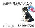 年賀状 犬 戌年のイラスト 34994720