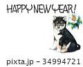 年賀状 犬 戌年のイラスト 34994721