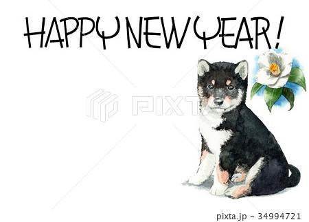 犬の賀詞入り年賀ハガキ素材黒柴犬ヨコ型 34994721