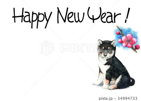 犬の賀詞入り年賀ハガキ素材黒柴犬ヨコ型 34994733