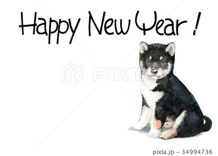 犬の賀詞入り年賀ハガキ素材黒柴犬ヨコ型 34994736