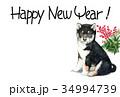 年賀状 犬 戌年のイラスト 34994739