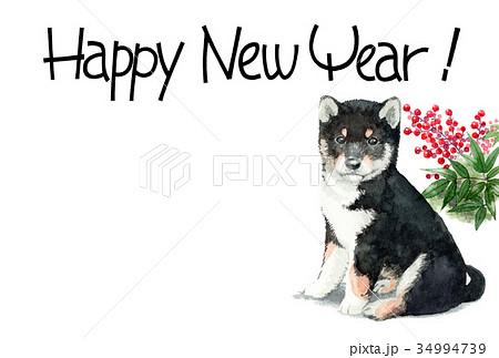 犬の賀詞入り年賀ハガキ素材黒柴犬ヨコ型 34994739