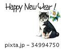 年賀状 犬 戌年のイラスト 34994750