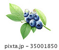 ブルーベリー水彩1 35001850