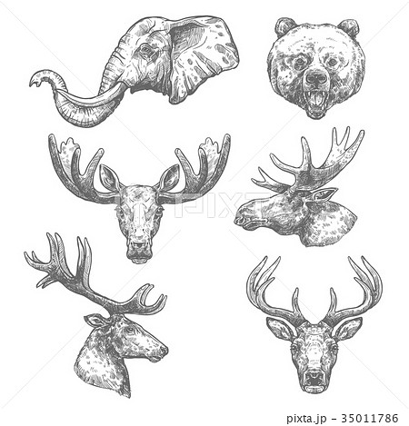 Animal sketch set of african and forest mammal 35011786