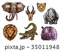 動物 ぞう ゾウのイラスト 35011948