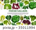 ベジタブル 野菜 サラダのイラスト 35011994