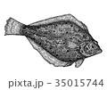カレイ 魚 海水魚のイラスト 35015744