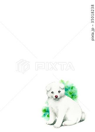 白い子犬のハガキ素材 35018238