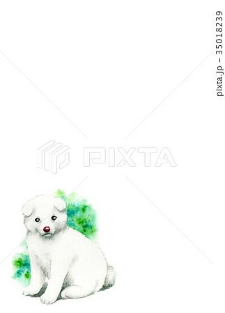 白い子犬のハガキ素材 35018239