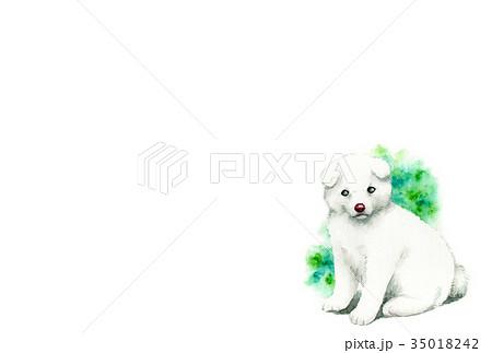 白い子犬のハガキ素材 35018242