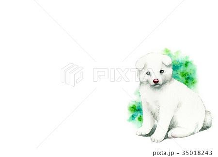白い子犬のハガキ素材 35018243