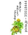 福寿草 花 年賀状のイラスト 35018444