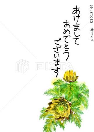 福寿草の賀詞入り年賀ハガキ素材 35018444