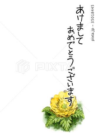 福寿草の賀詞入り年賀ハガキ素材 35018445